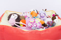 Кровать любимчика Стоковое Изображение RF