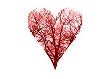 Кровеносные сосуды символа сердца стоковое изображение