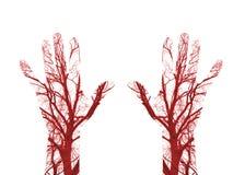 Кровеносные сосуды человеческой крови стоковые фотографии rf