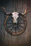 Кровопролитный череп Bull Стоковые Фотографии RF