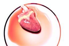 Кровотечение сердца Стоковая Фотография RF