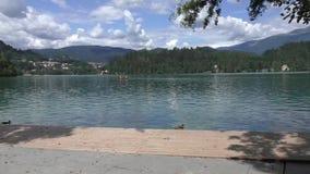 кровоточенное озеро в Словении 134105 сток-видео