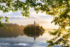 кровоточенное озеро Рокируйте на острове - романтичном месте в Словении, Европе стоковое фото rf