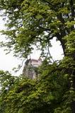 Кровоточенный замок на скале между ветвями дерева Стоковое Изображение RF