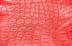 крокодиловая кожа предпосылки стоковые изображения rf