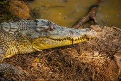 Крокодилы на ферме крокодила sarawak граничат Малайзия Стоковые Фото