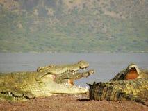 Крокодилы, озеро Chamo, Эфиопия стоковые изображения
