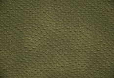 крокодиловая кожа Стоковые Фото