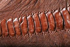 Крокодиловая кожа Стоковое Фото
