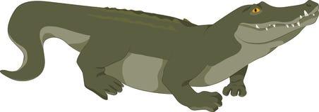 Крокодил вектора Стоковое Фото