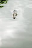 Крокодил в реке Стоковое Изображение RF