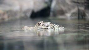Крокодил акции видеоматериалы