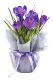 Крокусы в связанном баке обернутом в interlinings и фиолетовой ленте Стоковые Фотографии RF