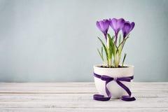 Крокус в вазе стоковое изображение