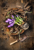 Крокус и корни цветков в шаре с ветроуловителем на деревенское деревянном Стоковые Фото