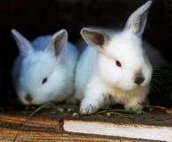 2 кролика в клетке Стоковые Фотографии RF