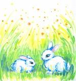 кролики белые Стоковые Фотографии RF