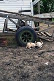 кролики 2 Большое колесо стоковое фото