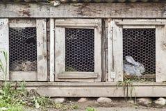 Кролики в клетке Стоковые Фото