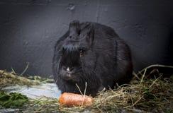 кролики молодые Стоковое Фото