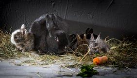 кролики молодые Стоковая Фотография
