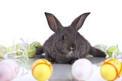кролики пасхи Стоковые Фото