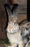 кролики Стоковое фото RF