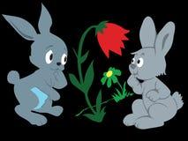 кролики Стоковые Фото