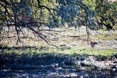 Кролик бежать через поле для скрывания стоковое изображение