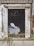 Кролик в клетке Стоковое Изображение RF