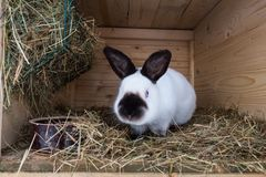 Кролик в конце hutch вверх стоковое фото rf
