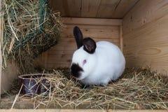 Кролик в конце hutch вверх стоковые фото