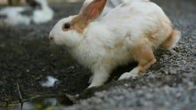 Кролик в саде