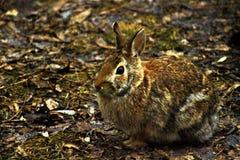 Кролик в своей среде обитания стоковое изображение rf