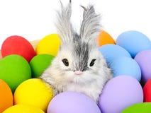 кролик зайчика и ассортименты покрашенных пасхальных яя Стоковое фото RF