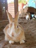 Кролик зайчика на Saguna Baug стоковая фотография rf