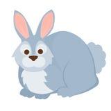 кролик зайчика Стоковые Фотографии RF