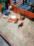 Кролик и цыпленок стоковые изображения rf