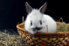 кролик корзины малый стоковое изображение rf