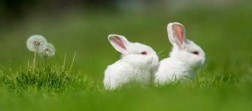 Кролик младенца белый в траве стоковая фотография rf