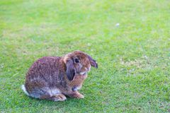 Кролик на зеленой траве в летнем дне стоковые фото