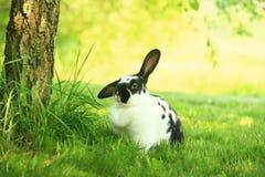Кролик на траве Стоковая Фотография RF