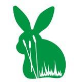 кролик одичалый Стоковая Фотография