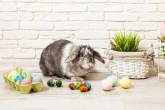 Кролик пасхи в доме Стоковые Изображения