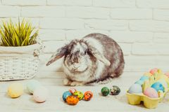 Кролик пасхи в доме Стоковое Фото