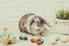 Кролик пасхи в доме Стоковые Фото