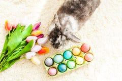 Кролик пасхи в комнате Стоковые Фотографии RF