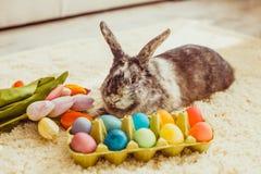 Кролик пасхи в комнате Стоковые Фото