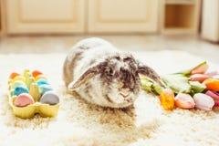 Кролик пасхи в комнате Стоковое Фото