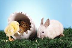 кролик пасхи цыпленка Стоковые Фотографии RF